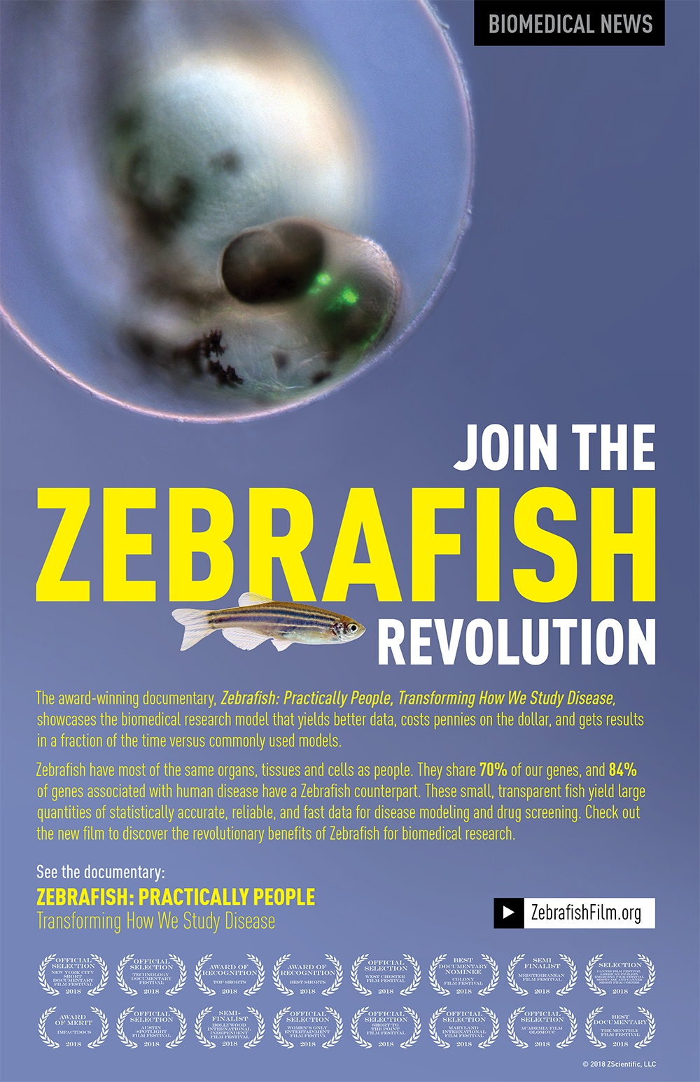 Zebrafish-Research-Documentary-Jennifer-Manner-Zebarfish-Practically-People-Poster
