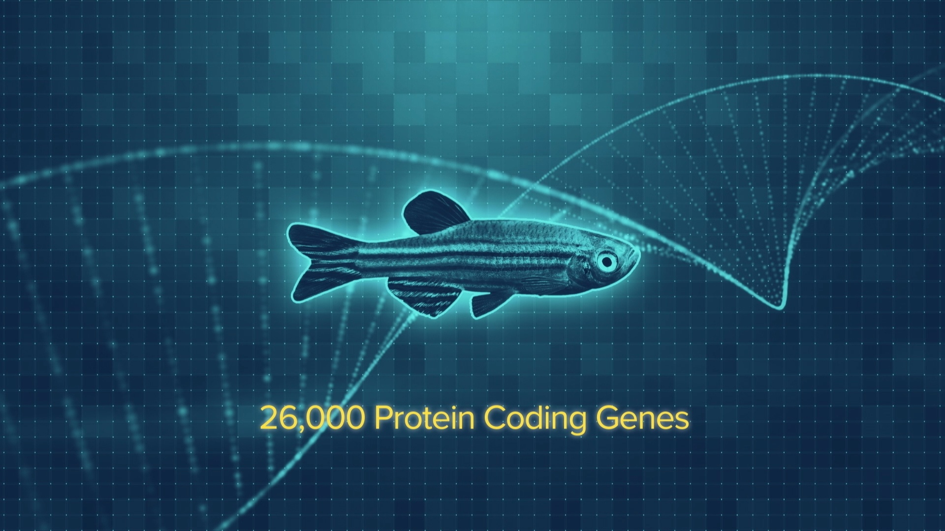 Zebrafish-Research-Documentary-Jennifer-Manner-Zebarfish-Practically-People-Screenshot-04